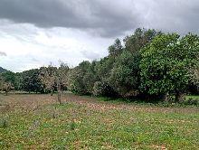 Casas en Campos